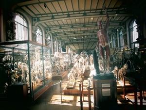 galerie d'anatomie comparée et de paléontologie02
