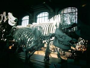 galerie d'anatomie comparée et de paléontologie06