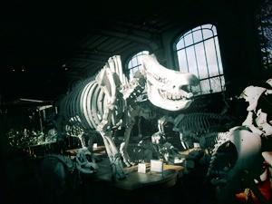 galerie d'anatomie comparée et de paléontologie07