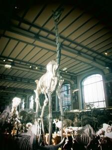 galerie d'anatomie comparée et de paléontologie09