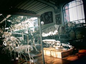 galerie d'anatomie comparée et de paléontologie10