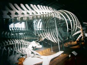 galerie d'anatomie comparée et de paléontologie16