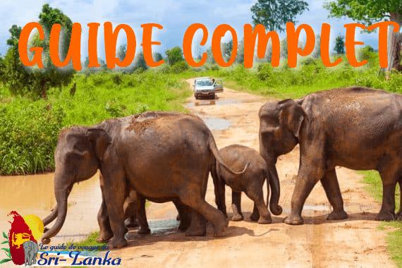 Guide chauffeur francophone au Sri Lanka