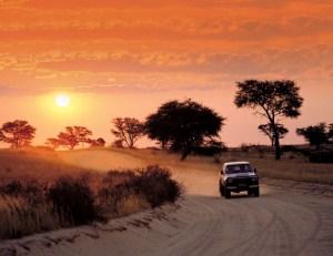 Safari-Afrique-du-Sud