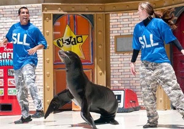 Sea Lions Live Show Sea World