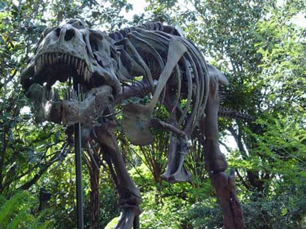 Dinoland Disney Florida USA