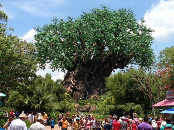 Tree of Life Animal Kingdom Orlando