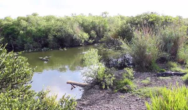 Everglades - top 5 seværdigheder Florida