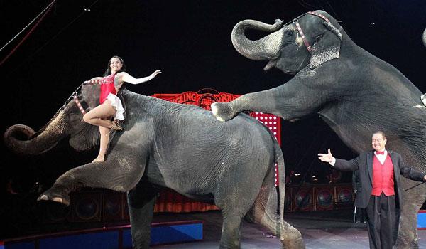Stat i USA forbyder vilde dyr i cirkus