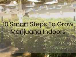 How To grow marijuana indoors with 10 smart steps