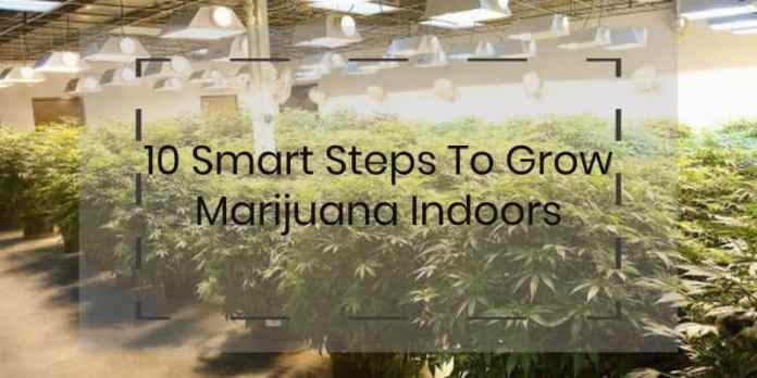 How To grow marijuana indoors with 10 smart steps