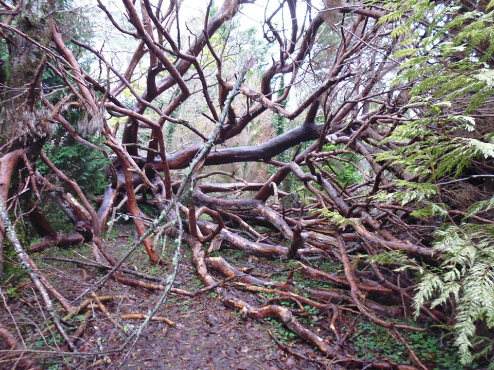 fallen tree P1010259