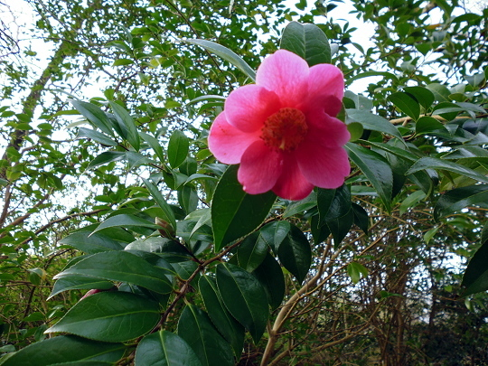 flower P1010349