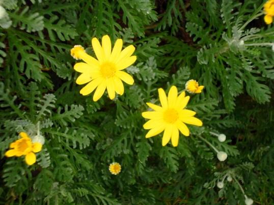 flower s P1010377
