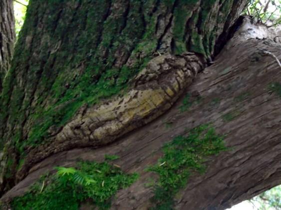 DSC00603married tree