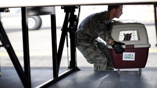 Prendre l'avion avec son animal de compagnie: ce qu'il faut savoir