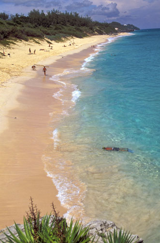 Bermuda Pink Beach Photos Pictures Snorkeling Near Shore