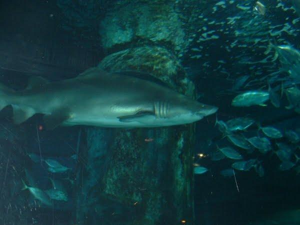 London Aquarium