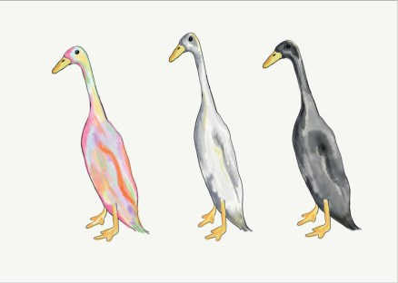 Indian Runner ducks