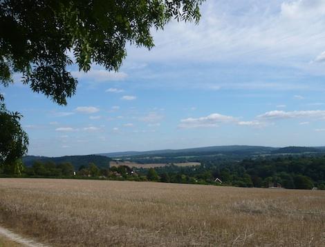 Green belt land south of Guildford.