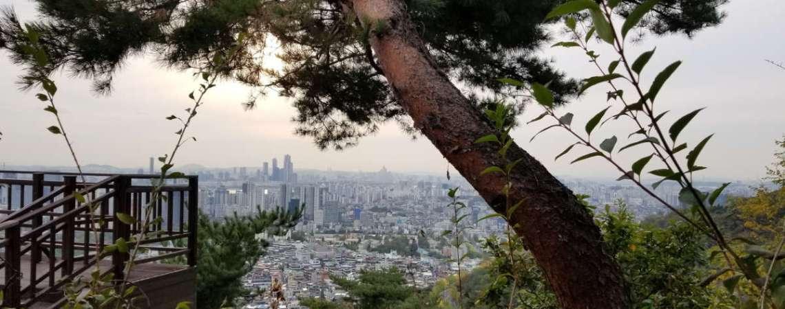 En forêt avec un luthier à Séoul