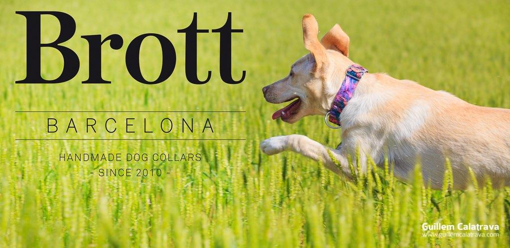 Fotografiant gossos amb collarets Brot