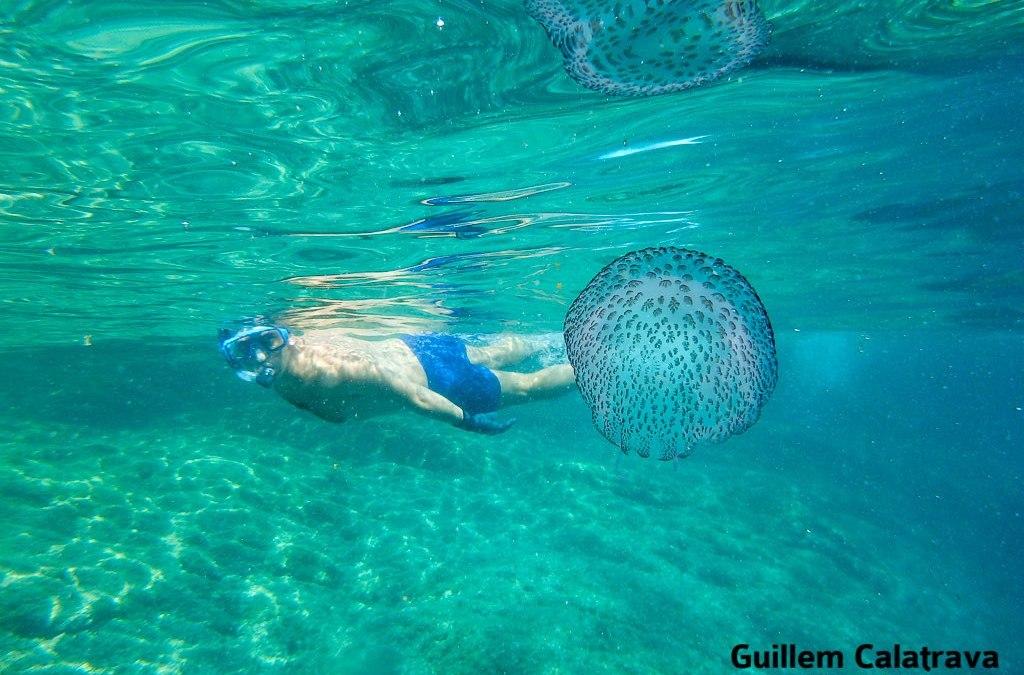 Nadando junto a una medusa