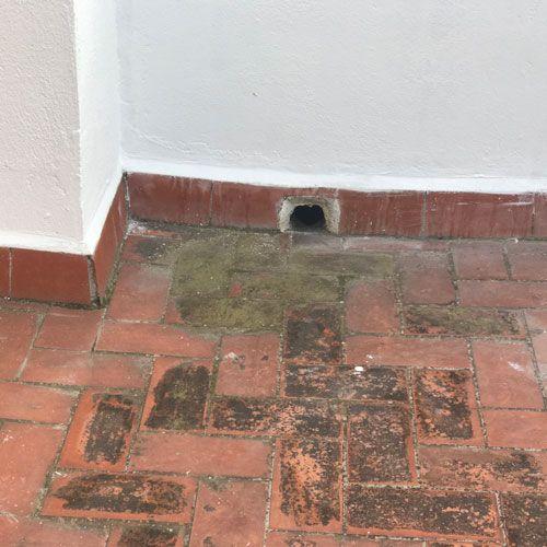 Deficiencias ITE Guillem Ros Studio - Falta de mantenimiento cubiertas planas