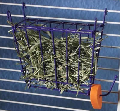guinea pig hay and grass