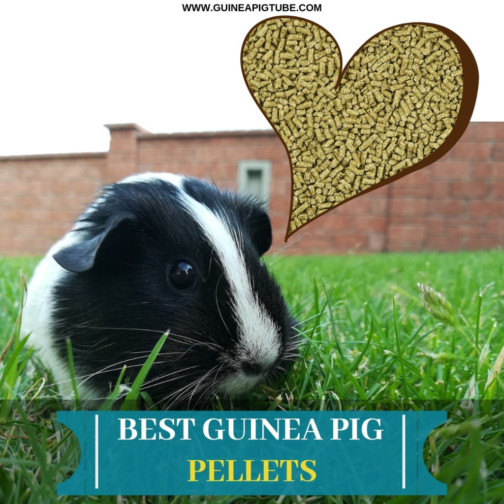 Best Guinea Pig Pellets