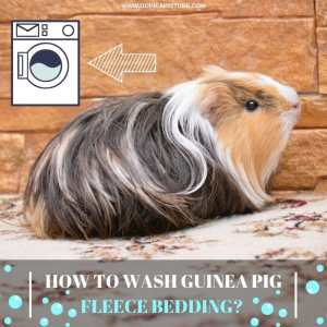 How to Wash Guinea Pig Fleece Bedding