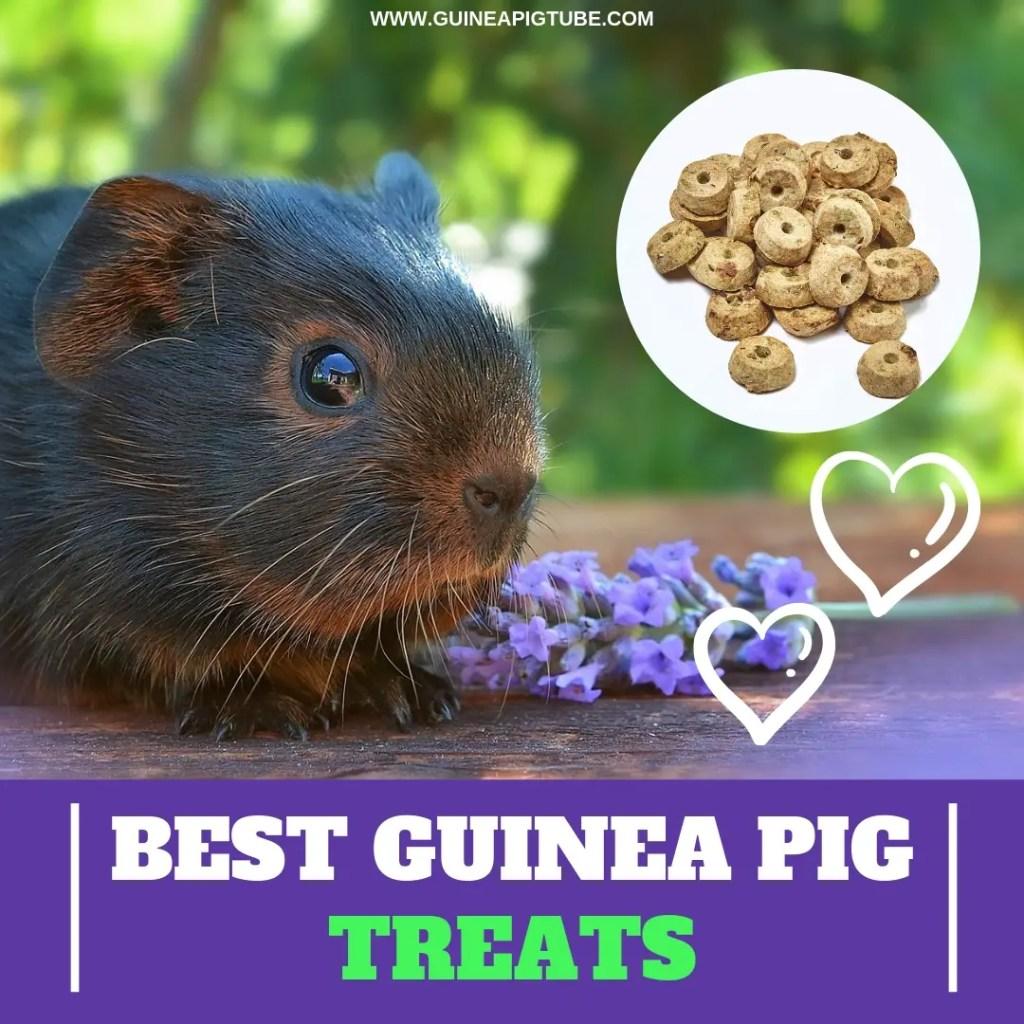 Best Guinea Pig Treats