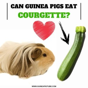 Can Guinea Pigs EatCourgette