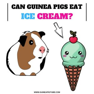 Can Guinea Pigs Eat Ice Cream