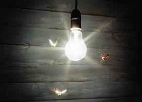 polilla en la luz