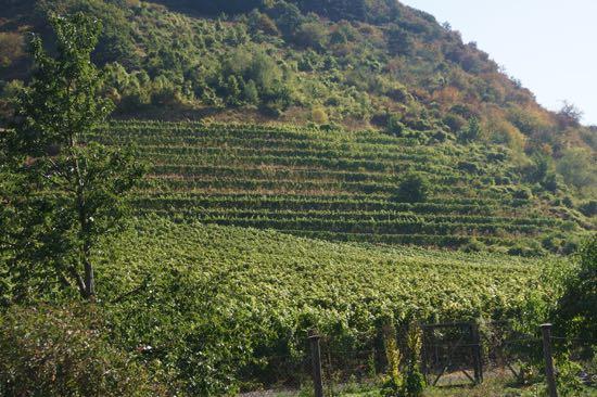 vinmarker