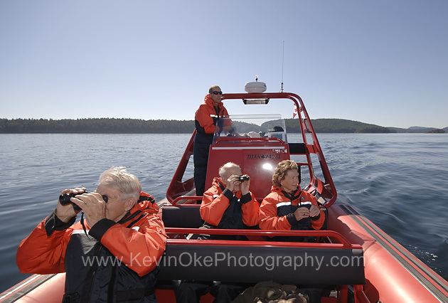 Whale watching has become one of the Gulf Islands major tourist attractions. The resident pods frequent the area from May until November.