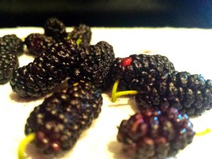 berry sweet memories
