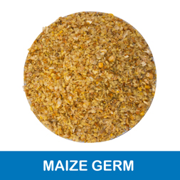 Gulshan Polyols Limited - Corn/Maize Germ