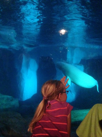 Hello Beluga Whales!