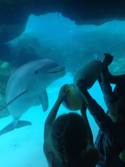 Playing with the Dolphins