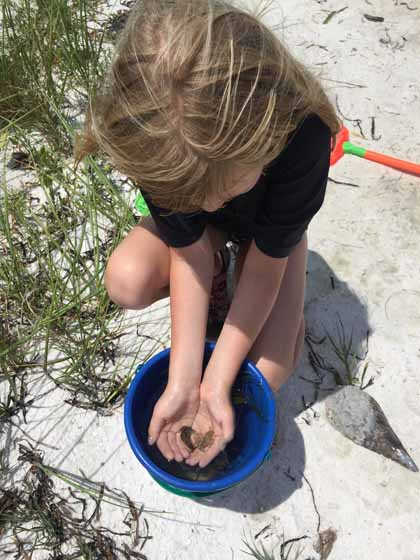 Beloved Sea Slugs