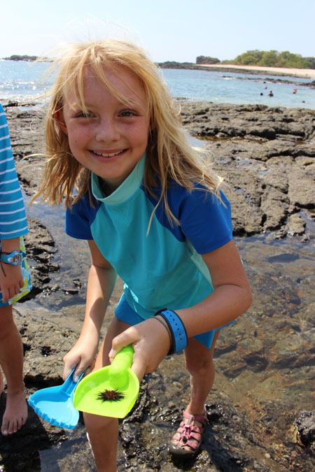 Fun with Sea Urchins