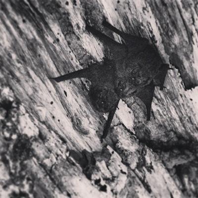 Family of Bats