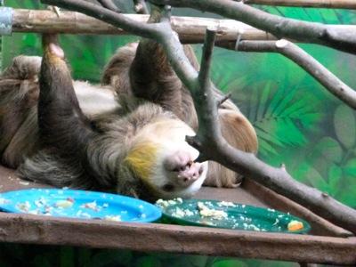 Johnny Depp the Sloth