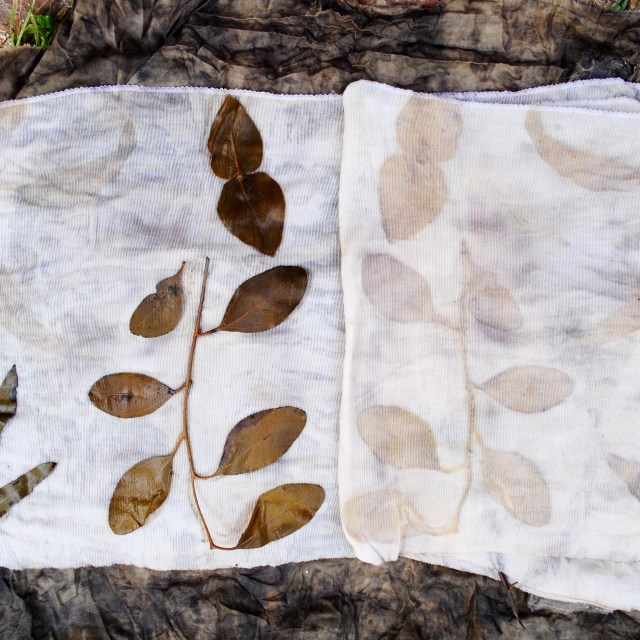 Eco-print with eucalyptus leaves on fabric mordanted with blood