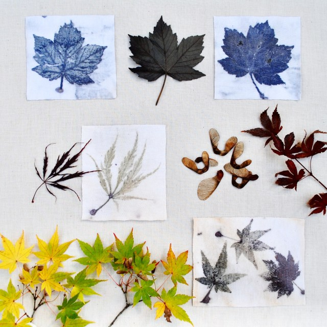 Maple leaf eco-prints on cotton, from The Leaf Guide ebook