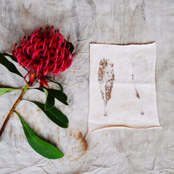 Waratah leaf eco-printed on cotton