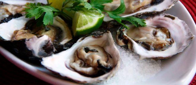 Vila Palatéia: encontro com as ostras e a Mata Atlântica