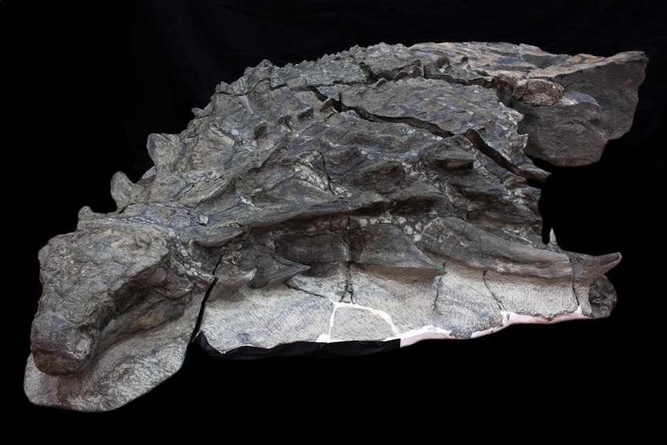 A Dinosaur So Well Preserved It Looks Like a Statue